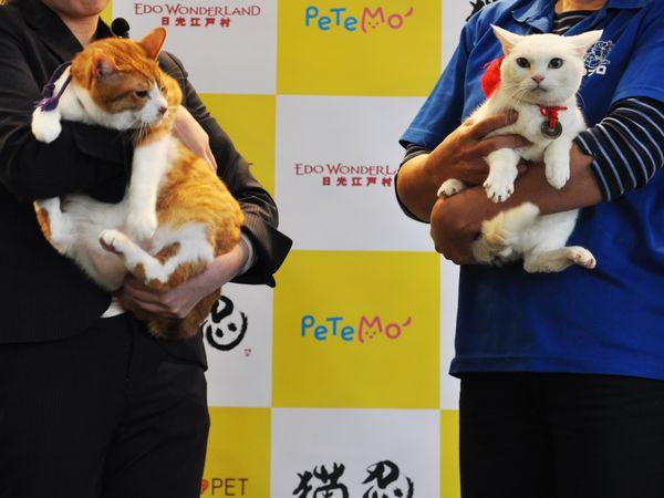 「猫忍」猫の日イベントオフィシャル写真3【左:金時、右:あなご】