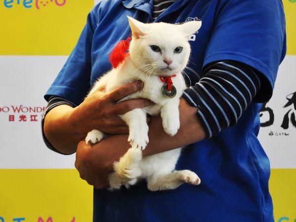 「猫忍」猫の日イベントオフィシャル写真4