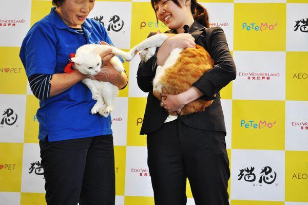 「猫忍」猫の日イベントオフィシャル写真6