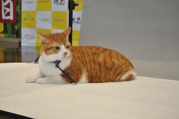 「猫忍」猫の日イベントオフィシャル写真8
