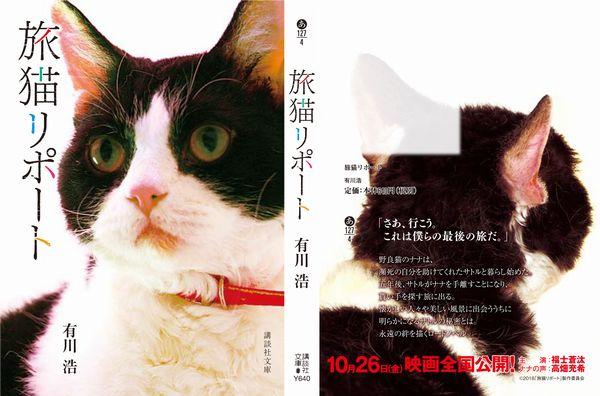 スペシャル猫帯
