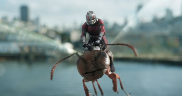Marvel Studios ANT-MAN AND THE WASP Ant-Man/Scott Lang (Paul Rudd) Photo: Film Frame ©Marvel Studios 2018