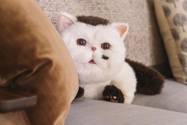 「おじさまと猫」#2 (3)