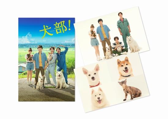 『犬部!』ポストカードセット